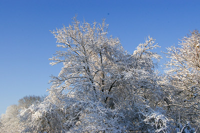First Snow - December 2009