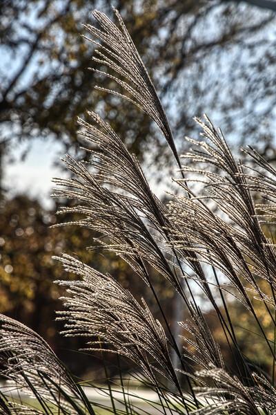 IMAGE: https://photos.smugmug.com/Nature-and-Landscape/i-d45qPwc/0/a097a986/L/_MG_2336-L.jpg