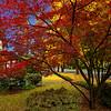 Salem Fall color