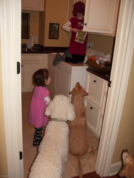 Kiana lecturing to the dogs.
