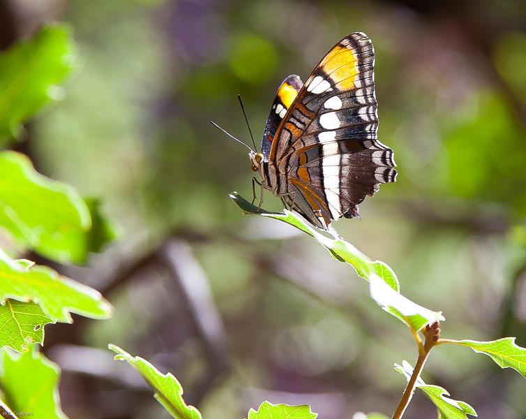 Butterfly in Zion Park