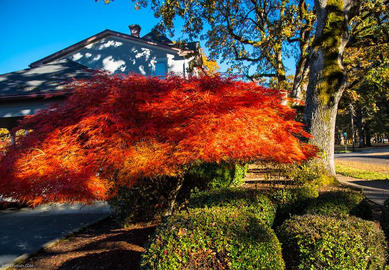 local Salem Fall color