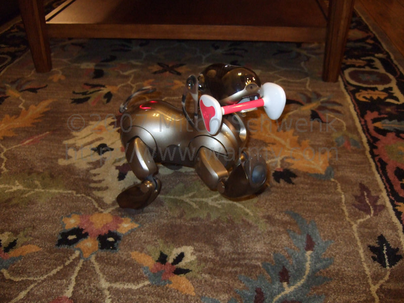Aibo dancing with his Aibone.