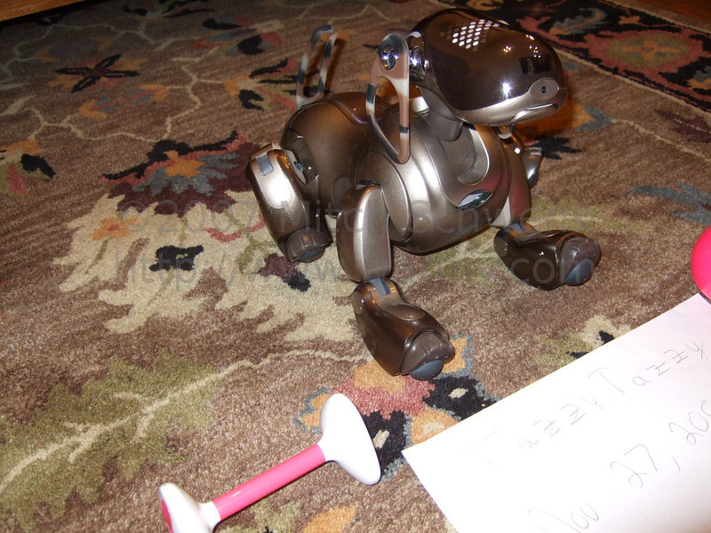 Aibo in process of standing up.