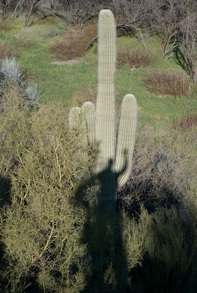 Self-Portrait-with-Saguaro-(1-of-1)