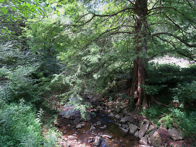 hemlock tree and creek, The Botanical Gardens at Asheville