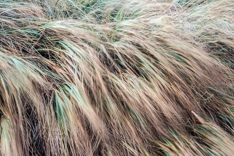 "<span id=""title"">Grass</span> <em>El Matador SB</em> Blowing in the wind..."