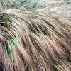"<span id=""title"">Grass</span> <em>El Matador SB</em> Blowing in the wind..."