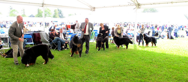 UK Dog Show - Richmond Championship Dog Show - Surrey