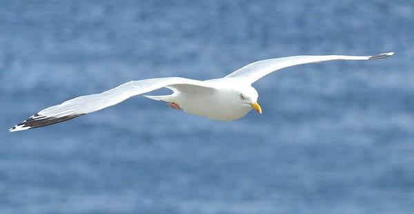 Galway Birds