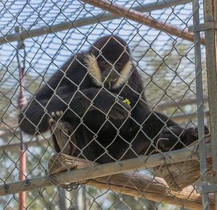 Gibbons Conservation Center