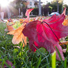 "<span id=""title"">Red Leaf</span> <em>Santa Monica / Doheny</em> Feels like Fall here in Beverly Hills. After a short stop at the fountain, we headed down the dirt path through Beverly Gardens Park that goes along Santa Monica Boulevard for 1.5 miles."