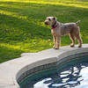 "<span id=""title"">Beverly Hills Dog</span> <em>Santa Monica / Doheny</em> We took a small break when we got to the border of Beverly Hills. A lady with a dog was also sitting at the fountain while her dog ran around."