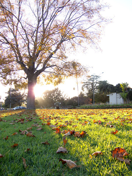 "<span id=""title"">Leaves on Grass</span> <em>Santa Monica / Canon</em> The sun was close to setting at this point, making some cool shadows with the leaves and the grass. Again, feels like Fall."