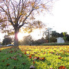 """<span id=""""title"""">Leaves on Grass</span> <em>Santa Monica / Canon</em> The sun was close to setting at this point, making some cool shadows with the leaves and the grass. Again, feels like Fall."""