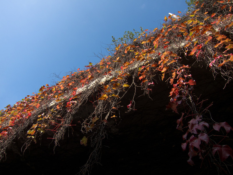 """<span id=""""title"""">Hanging Vines</span> <em>Temple / 110 Freeway</em> Another view of the vines, from almost directly underneath."""