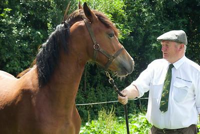 Horse-Ambulance-210714 034