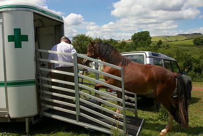 Horse-Ambulance-210714 030