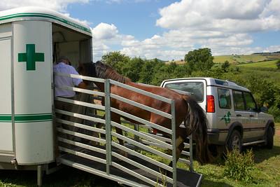 Horse-Ambulance-210714 031