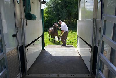 Horse-Ambulance-210714 019