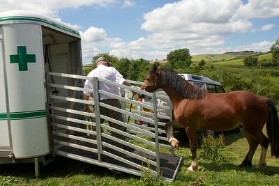 Horse-Ambulance-210714 029