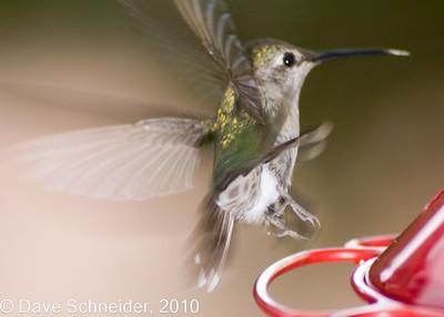 Hummingbirds, Aug 2006