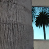 "<span id=""title"">Palm Trunk and Reflection</span>"