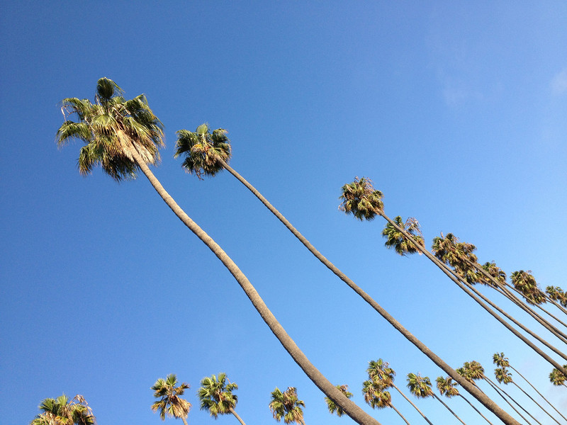 "<span id=""title"">Tall Palms</span>"