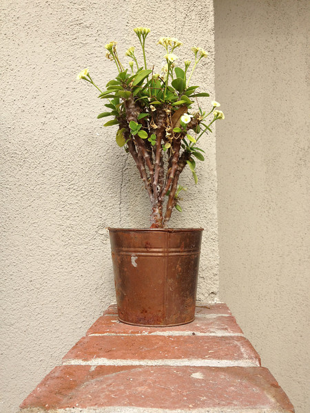 """<span id=""""title"""">Potted Plant</span>"""