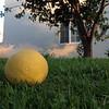 "<span id=""title"">Lemon in Grass</span>"