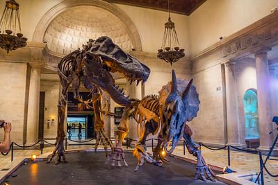 LA Museum of Natural History - CA, June 2015