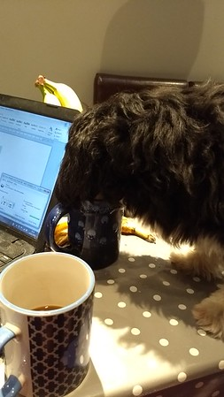 The crazy dogs drink coffee!