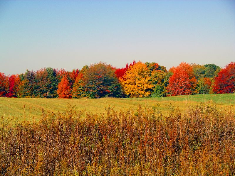 Fall colors, Michigan 2003