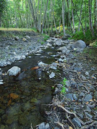 Sulphur Creek - St. Helena California