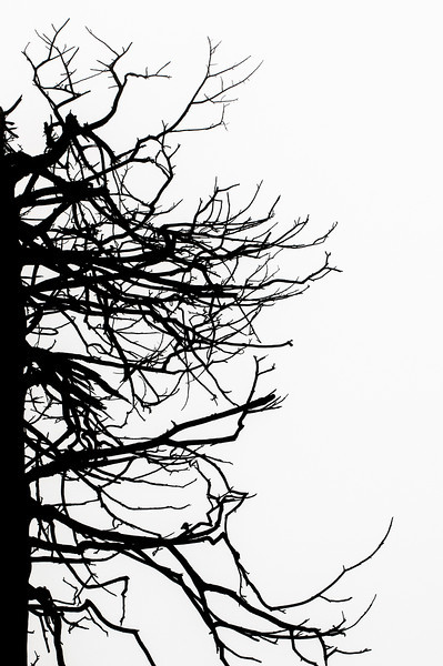 Silhouette of a Jagged Tree