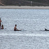 San Diego - Dolphins- June 2014-3