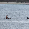 San Diego - Dolphins- June 2014-4