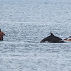 San Diego - Dolphins- June 2014-15