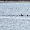 San Diego - Dolphins- June 2014-6