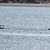 San Diego - Dolphins- June 2014-7
