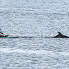 San Diego - Dolphins- June 2014-10