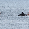 San Diego - Dolphins- June 2014-18