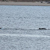 San Diego - Dolphins- June 2014-9