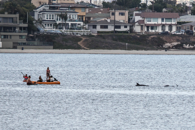 San Diego - Dolphins- June 2014-1