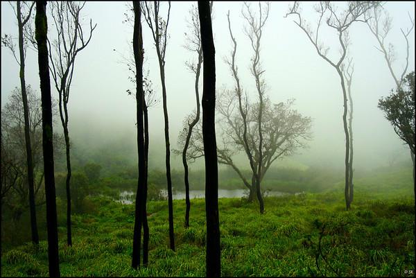 Misty Mystical.....