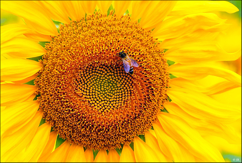 Intricate - are the patterns and relationships in nature.....