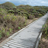 "<span id=""title"">Boardwalk</span> A straight section of the boardwalk that leads from the parking lot all the way to the ocean. Note the huge variety of vegetation."