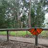 "<span id=""title"">Butterfly Sign</span> Whoa! That's the biggest butterfly I've ever - nope, just a sign."