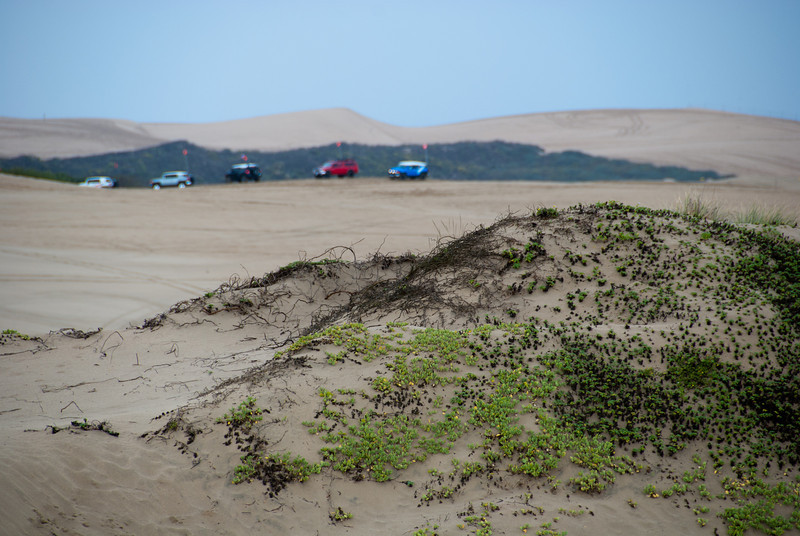 """<span id=""""title"""">Off Roading</span> 4x4s lining up to drive the dunes."""