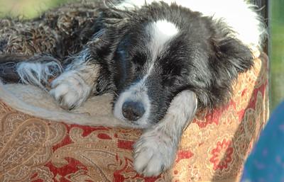 Sadie Bruce  [ 2007 Cortes Island, BC ]